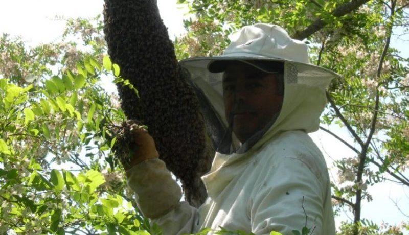 Comment capturer un essaim d'abeilles